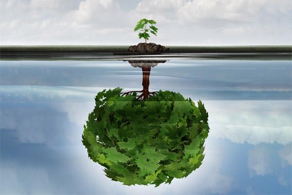 Kleine Pflanze, die in der Wasserspiegelung ein großer Baum ist